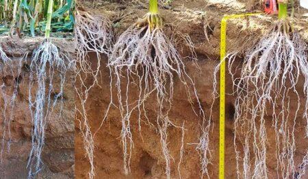 Capacidade de armazenamento de água do solo
